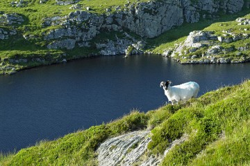 3 Day Adventure Tour – Wild Wexford & Wicklow